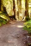 Morning Path to the Golden Thread,Cedar Trail, Glacier National Park, Montana. Marc Caryl Nature Photos