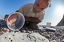 Professor Karim Vahed releasing captive bred Scaly Crickets (Pseudomogoplistes vicentae) onto a shingle beach site on the Devon coast. UK, June 2016.