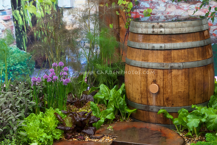 Rainbarrel and Herb Garden &amp; Vegetables