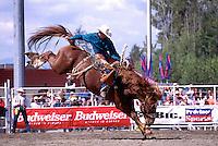 Surrey, BC, British Columbia, Canada - Cloverdale Rodeo, Saddle Bronc Riding, Cowboy Rider on Wild Horse