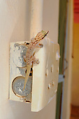 A Gecko (Hemidactylus robustus) perched on a wall plug, Socotra, Yemen