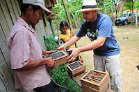 Brazil, State of Pará. Giorgio Venturieri harvesting a hive. The system of hives put in place by Embrapa'a program permits the bees to store the nectar in an easy to harvest part of the hive.