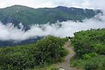 lone hiker walks up a verdant path on Mt Robert as a low lying cloud fills the valley below, in Juneau, Alaska