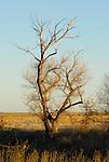 raptor flying near tree on Rd. 25 near Woodland