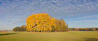 Panoramic photo, Fall Landscape and Yellow Trees