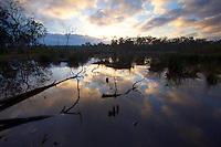 Wongi Wetlands