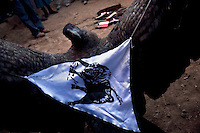 A wild condor is held by its wings with a flag of a bull attached to it as it is paraded around the village during the Yawar Fiesta in Coyllurqui in the Peruvian Andes on Independence Day. This celebration symbolises the clash between the indigenous people (represented by the condor) and the Spanish (represented by a bull). The condor is paraded around town, strapped on top of the bull, given alcohol, and finally set free.