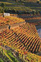 autumn colours vineyards quinta do seixo sandeman douro portugal