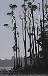 Lake Mahinapua skirted by tall Kahikatea trees