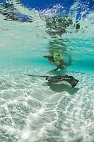 Snorkeler Jen Gibbud with a Southern stingray<br /> Salomon Beach.Virgin Islands National Park.St. John, U.S. Virgin Islands