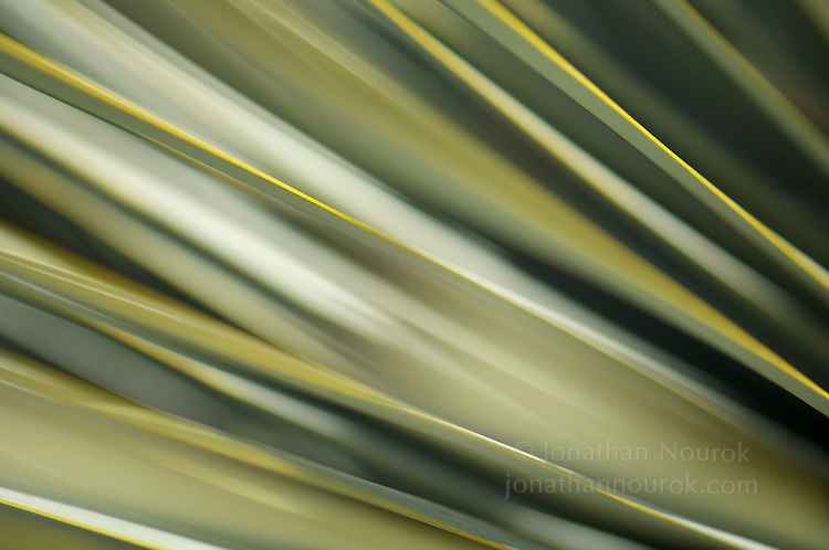 close-up / macro photograph of a succulent plant