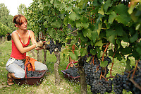 grape harvest at Château La Fleur Petrus..photograph by .Owen Franken.... - Photograph by Owen Franken