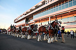 2016_10_15 Budweiser Clydesdales