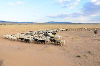 Irene Bennalley's herd heads straight across the desert plains near Toadlena, NM, for the Chuska Mountains, where they will spend the summer.