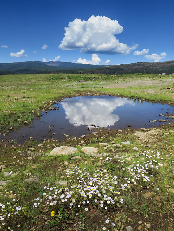 Afternoon thunderhead reflecting in the White Mountains Arizona