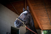 HALLANDALE BEACH, FL - JAN 27: Arrogate in portrait at Gulfstream Park Race Course on January 27, 2017 in Hallandale Beach, Florida. (Photo by Alex Evers/Eclipse Sportswire/Getty Images)