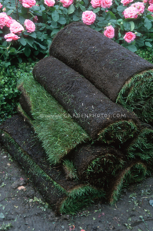 Lawn sod grass rolls, ready for use, against pink roses