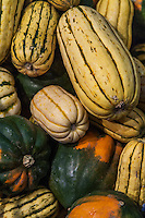 Various newly harvested squash