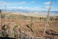 Prime elk habitat in the Shoshone National Forest Wyoming in autumn