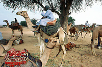 Sudan. West Darfur. Habilah. On sunday is market day. A group of nomads, belonging to the arab milicia called Janjaweed, came with their camels in the village to shop for food and trade or buy animals. © 2004 Didier Ruef