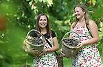 Foto: VidiPhoto<br /> <br /> JAARSVELD - Pieternel Kers (19, r) uit Lopikerkapel en Colinda Schenkel (21) uit Lopik zijn woensdag hard aan het werk in een kersenbongerd in Jaarsveld. Beide dames zwaaien de scepter in de 1,5 ha. grote hoogstamboomgaard, die gepacht is door Pieternel. Omdat zij deze week echter nog naar school moet, heeft Colinda tijdelijk de touwtjes in handen. Vrouwen de baas dus, hoewel ze hulp krijgen met de kersenoogst en het verjagen van de spreeuwen (heuien) van een paar vakantiewerkers van het andere geslacht. Omdat de kersen door gebrek aan zon niet snel rijpen, kan er voorlopig nog rustig aan geplukt worden. De hoogstamboom staat vol met oude rassen. De jonge plukkers moeten hoog de boom in om de vruchten te kunnen oogsten. Volgens Pieternel is het beleid in de boomgaard om de lekkerste kersen zelf op te eten en dat je niet uit de boom moet vallen.