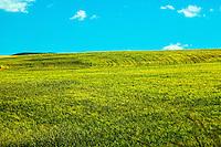 Green Idaho