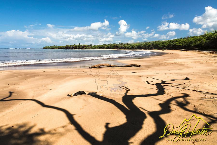 Tree casting an interesting shadow on a  Kauai beach in Hawaii