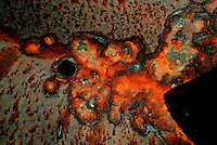 RUST ON A SHIPWRECK<br /> Oxide of iron formed by corrosion, an electrochemical reaction<br />   In moist conditions iron is rapidly oxidized by oxygen to form rust, a mixture of iron oxides.