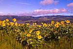 Tom Mccall Preserve, Oregon.