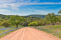 We captured this image of the Texas Hill Country down this dirt road with some bluebonnets along with a turkey buzzard flying in the blue sky.  We thought it was a nice landscape of the Texas Hill Country in spring time.