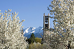 0704-01 GCS April 2007 Spring on Campus..Bell Tower, Trees in Blossom..April 5, 2007..Photo by Mark A. Philbrick/BYU..Copyright BYU Photo 2007.All Rights Reserved.photo@byu.edu  (801)422-7322