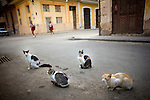 two cuban girls walk to school with cats in street