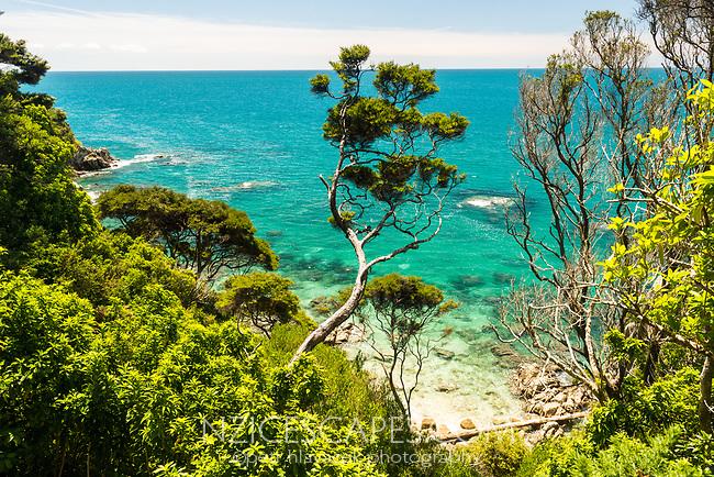 Crystal clear, turquoise waters of  sea near Anapai Bay on Abel Tasman Coast Track, Abel Tasman National Park, Nelson Region, South Island, New Zealand