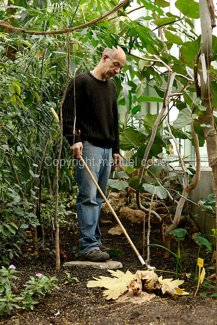 Tropical Rainforest Glasshouse (formerly Le Jardin d'Hiver or Winter Gardens), 1936, René Berger, Jardin des Plantes, Museum National d'Histoire Naturelle, Paris, France. Low angle view of a gardener clearing away dead leaves from the Tropical plants in the Art Deco style Glasshouse.