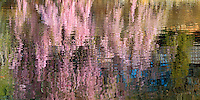 Reflection Cherry Blossoms, Brooklyn Botanic Garden, Brooklyn, New York, Japanese Hill and Pond Garden