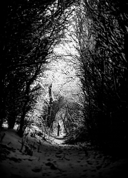 Silouette in wooded, snowy hollow of trees