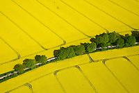 Knicklandschaft mit Rapsfeldern: EUROPA, DEUTSCHLAND, SCHLESWIG- HOLSTEIN, (GERMANY), 01.05.2014: Knicklandschaft mit Rapsfeldern