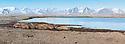 Group of Walrus (Odobenus rosmarus) hauled out on beach and sleeping. Prins Karts Forlandet off Spitsbergen, Svalbard, Arctic Norway.