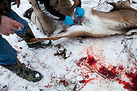 Mike Johnson, left, helps Donovan Nokes clean a young buck he killed on Sunday, December 4, 2011 in Webster City, IA.