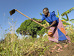 Biseny Akena harvests her sweet potatoes in the village of Amuca. A peace process that began in 2006 has brought hope to the two million people in northern Uganda who were displaced by the long war with the Lord's Resistance Army. In the village of Amuca, families have returned and are harvesting crops, building homes, and enjoying the first peace they've had for more than 20 years. The Lutheran World Federation, supported by ACT International, installed a well for this village, and will continue to accompany them as they experience peace.