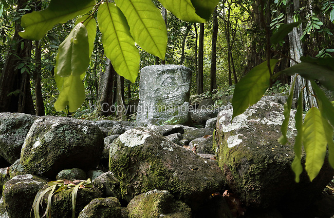 Carved stone tiki sculpture with large eyes and mouth, found in the location of the altar where human sacrifices would have been made, at the meae or religious sanctuary of Tohua Upeke, in the Ta'a Oa valley, on the island of Hiva Oa, in the Marquesas Islands, French Polynesia. Tiki sculptures represent Ti'i, a half-human half-god ancestor who is believed to be the first man. Tiki often have a huge head, symbolising power, and big eyes symbolising knowledge. Tiki are respected and are often placed outside houses as protective statues. Picture by Manuel Cohen