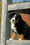 Bernese Mountain Dog Shopping cart has 3 Tabs:<br />