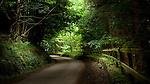 Summer rural scene in England