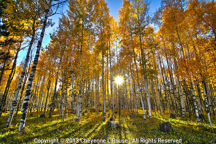 Arizona Gold - Arizona<br />