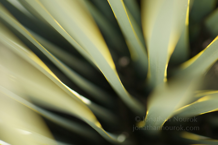 close-up / macro photograph of a succulent plant