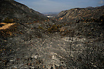 General view shows burnt forests in Dos Aguas, on July 02, 2012, near Valencia.(c)  Pedro ARMESTRE