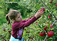 AT05-500z  Picking Apples, PRA