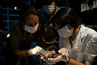 Voluntaria de la Fundacion Bioandina asiste el nacimiento de Inipi, un peque&ntilde;o condor que peso 187 gramos al nacer. <br /> <br /> Volunteers of the Bioandina fundation assist the birth of Inipi, a baby condor bird that weight 187 grams. The bird feed by the foundation until it reachs the devolepment to adapt to its environment in the mountains. Captive-bred condors are later  released in Andes mountain range as part of a program to fight the extinction of the largest bird of Western Hemisphere, also called the King of the Andes.