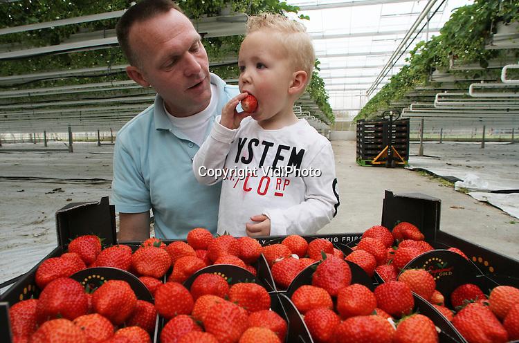 Foto: VidiPhoto..AMMERZODEN - De tweejarige Robin Uitert mag woensdag bij zijn buurman en aardbeienteler Jan Goesten (l) uit Ammerzoden (Gld), de eerstgeplukte aardbeien van het seizoen proeven. Robin is een echte kenner, want zijn vader Joost is ook aardbeienteler. Wie de lekkerste aardbeien heeft wil Robin niet zeggen. Goesten is woensdag gestart met de oogst van zijn elsanta's uit de kas, het meest bekende aardbeienras in Nederland. De consumptie en productie van echte Hollandse aardbeien zit nog steeds in de lift. Dit jaar is het aardbeien areaal in Nederland met 20 procent gestegen ten opzichte van vorig jaar. Omdat Hollandse aardbeien qua smaak tot de wereldtop behoort, is er vanuit heel Europa veel belangstelling voor dit oer-Hollandse product..