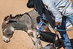 A nomad gives water to a donkey from a well in the desert.